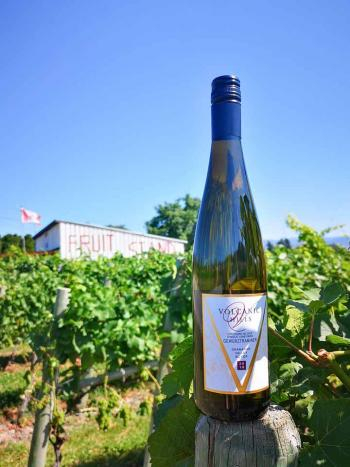 volcanic hills winery tour